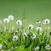 花便り - 離別の時 -