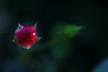 花便り - 希望の膨らみ -