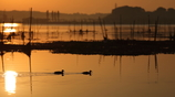生き物写真館 - 水鳥たちの優雅な泳ぎ -