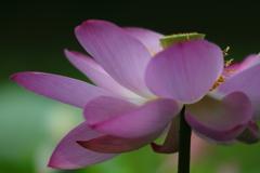 花便り - 出逢いへの感謝 -
