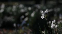花便り - 気品に満ちて -
