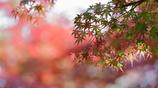花便り - 秋色の目覚め -