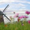 印旛沼・風車 - 秋陽に誘われて -