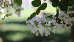 花便り - 暫しの涼 -