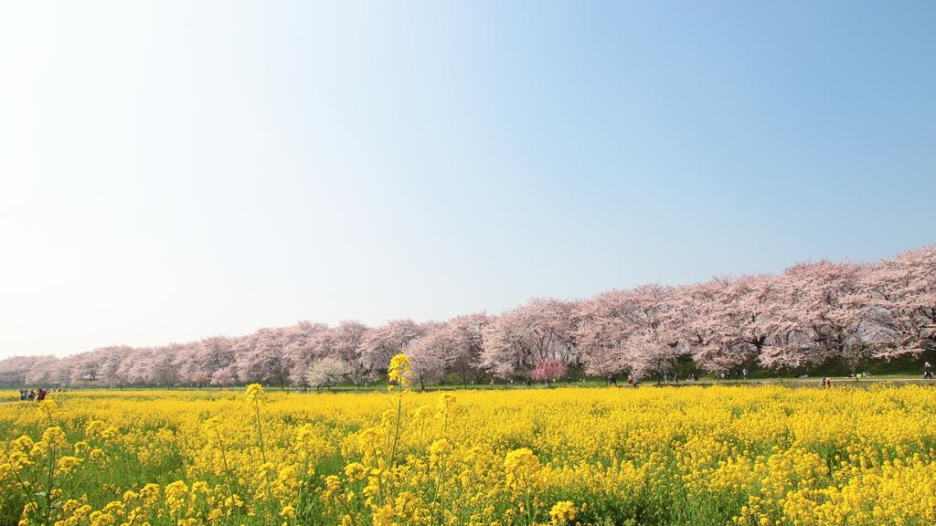 花便り - 春色の競演 -
