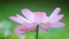花便り - 絢爛豪華な咲きっぷり -
