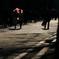 街の情景 - 初夏の陽射しの並木道 -
