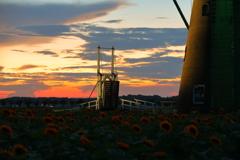 印旛沼・風車 - 向日葵の咲く跳ね橋 -