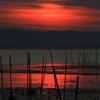 印旛沼・朝景 - 深緋の朝 -