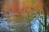 花便り - 秋への移ろい -