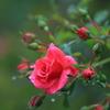花便り - 秋雨に打たれて -