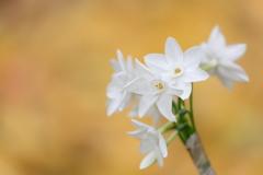 花便り - 黄の中の白 -