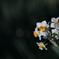 花便り - 冬の陽射しの下で咲く -