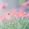 花便り - 温室の春 -