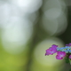 花便り - 木洩れ日の紫陽花 -