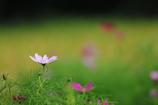 花便り - 優美な花姿 -