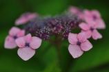 花便り - 元気な女性 -