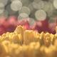 花便り - 華やぎの三層 -