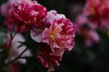 花便り - エドガー・ドガ -