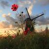 印旛沼・風車 - 丈比べ -