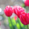 花便り - 春気分にさせられて -