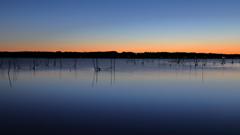 印旛沼・朝景 - 寒蒼の水面 -