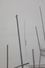 生き物写真館 - 霧中のハンター -