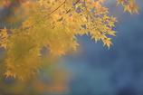 花便り - 虚ろな秋 -