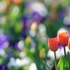 花便り - 冬の思いやり -