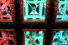 生き物写真館 - 天井金魚 -