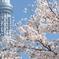 花便り - 墨堤の桜とスカイツリー -