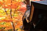 花便り - 唐破風の秋色 -