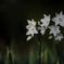 花便り - 平安の神秘 -