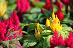 花便り - 小さな花たちのお出迎え -