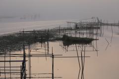 印旛沼・朝景 - 霧の中の静と動 -