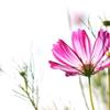花便り - 透過一凛 -