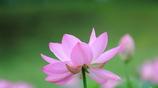 花便り - 瑞々しく -