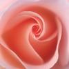 花便り - スプリングコサージュ -