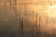 印旛沼・朝景 - 気嵐の中の水鳥 -