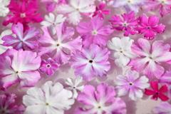 花便り - 水盤の趣 -