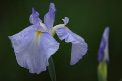 花便り - 水の光 -