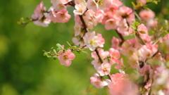 花便り - 新しい古典 -