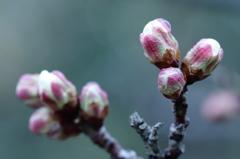 冬耐え 春待つ