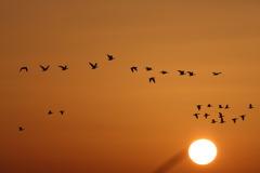 蕪栗沼 日の出