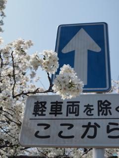 春の一方通行