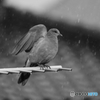 雨洗いの翼