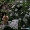 マダラ岩と猫