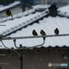 アンテナの鳥達