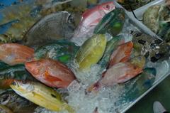 沖縄 カラフルな魚たち