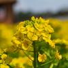 黄色は春の色